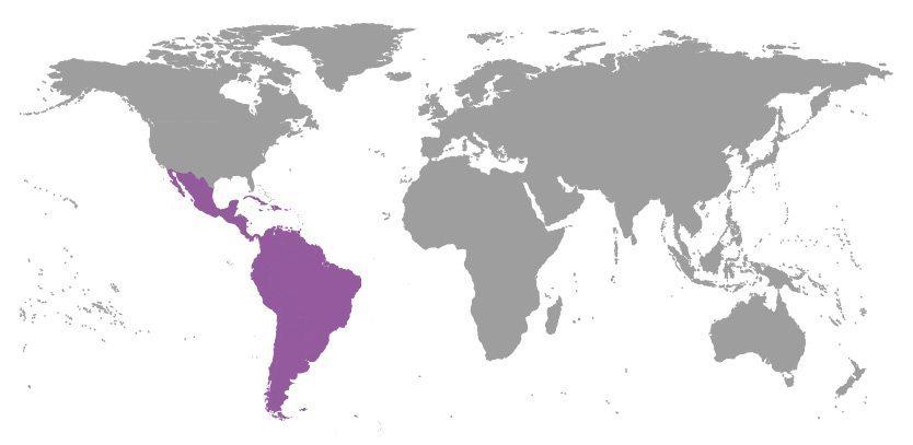 Epilepsy Help Latin America