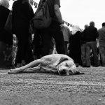 'Seizure and crowd' - Niloufar Farhadi